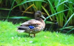 Krzyżówki – ptaki ocharakterystycznym ubarwieniu